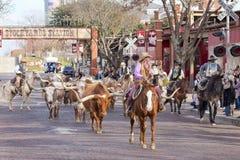 Longhornsnötkreaturdrev på de Fort Worth kreatursinhägnaderna Arkivbild