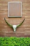 Longhornu bizon Obraz Royalty Free
