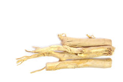 Longifolia di Eurycoma anche conosciuto come tongkat ali. Fotografie Stock Libere da Diritti