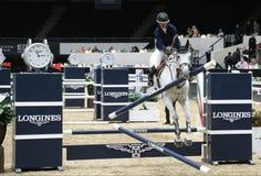 Longines beherrscht Pferd Lizenzfreies Stockbild