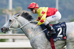 LONGINES Hong Kong Cup : California Memory Royalty Free Stock Photography