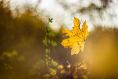 Longing for autumn. A colourful leaf is hanging in the air Royalty Free Stock Images