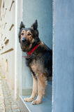 Longing dog Royalty Free Stock Photography