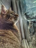 Longing for the outdoors. My cat, Volt, curiously watching the outside of my home. No doubt he wishes he were outside Royalty Free Stock Image