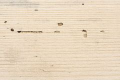 Longitudinal section of coniferous wood with traces of insect pest. Scolytus bark beetle traces on wood royalty free stock photos