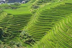 LongJi Reisterrassen (China) im Spätsommer Lizenzfreies Stockbild