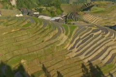 Longji-Reisterrassen, Guangxi-Provinz, China Stockfotos