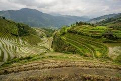 Longji Rice tarasy w Chiny Obrazy Stock