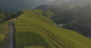 Longji Rice Terrace in Ping An Village stock video