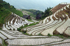 Longji rice terraces Royalty Free Stock Photo