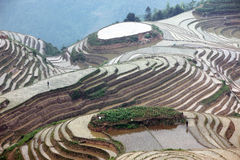 Longji rice terraces, China Royalty Free Stock Image