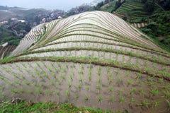 Longji rice terraces, China Guangxi province Stock Photography