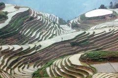 Longji rice terraces,  China Royalty Free Stock Photos