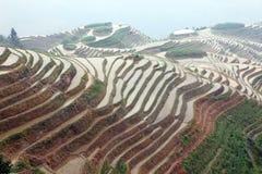 Longji rice terraces,  China Royalty Free Stock Photography