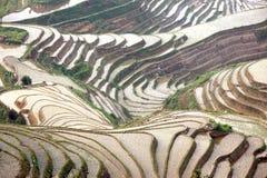 Longji rice terraces,  China Stock Image