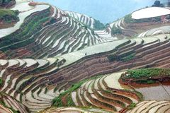 Longji rice terraces,  China Royalty Free Stock Photos