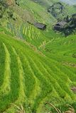 LongJi rice terraces (China) in late summer Stock Photos