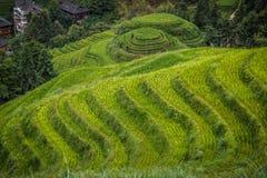 Longji rice terraces. Dazhai village in Longji rice terraces, Guangxi province Royalty Free Stock Images