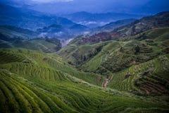 Longji rice terraces. Dazhai village in Longji rice terraces, Guangxi province Stock Images