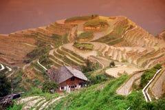 Longji rice terraces, Guangxi province Royalty Free Stock Images