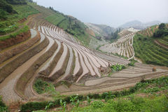 Longji rice terraces Royalty Free Stock Images
