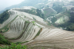 Longji rice terraces, Guangxi province, China Royalty Free Stock Photography