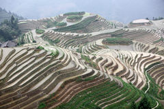 Longji rice terraces, Guangxi province, China Royalty Free Stock Photo