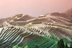 Longji rice terraces, Guangxi province, China Stock Photography