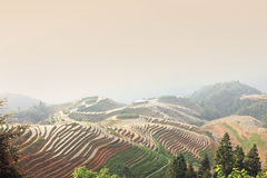 Longji rice terraces, Guangxi province, China Royalty Free Stock Images