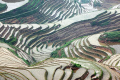 Longji rice terraces, Guangxi province, China Royalty Free Stock Photo