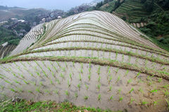Longji rice terraces, Guangxi province Royalty Free Stock Photography