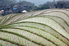 Longji rice terraces, Guangxi province, China Royalty Free Stock Photography