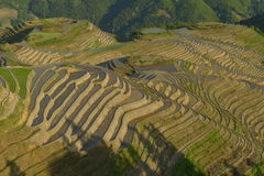 Longji Rice Terraces, Guangxi province, China. The Longji Rice Terraces are located in Longsheng County, about 100 kilometres from Guilin, Guangxi, China Royalty Free Stock Image