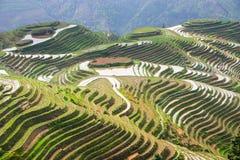 Longji Rice Terraces Stock Photo