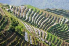 Longji Rice Terraces Stock Photos