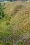 Longji Rice Terraces Royalty Free Stock Photos
