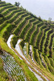 Longji Rice Terraces Stock Photos