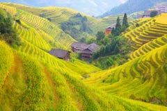 Longji riceterrasser arkivbild