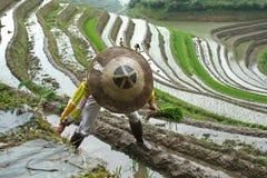 longji ryż tarasy Obraz Royalty Free