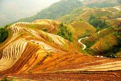 Longji tarasu ryż pole Zdjęcia Royalty Free