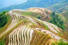 Longji tarasu ryż pole Zdjęcie Royalty Free
