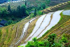 Longji tarasu ryż pole Zdjęcie Stock