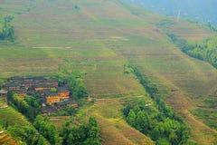 Longji tarasu ryż pole Fotografia Royalty Free