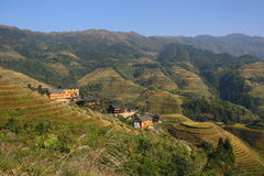 Longji terassenförmig angelegte Reis-Felder Stockfoto