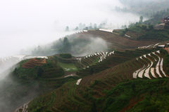 Longji terrace with fog ,Guilin Royalty Free Stock Image