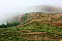 Longji terrace with fog ,Guilin Royalty Free Stock Photography