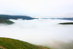 Longji terrace with fog ,Guilin Stock Image