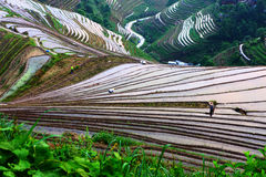 Longji terrace ,Guilin Stock Images