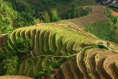 Longji terrace ,Guilin Stock Images