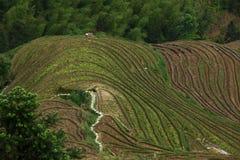 Longji terrace ,Guilin Stock Image